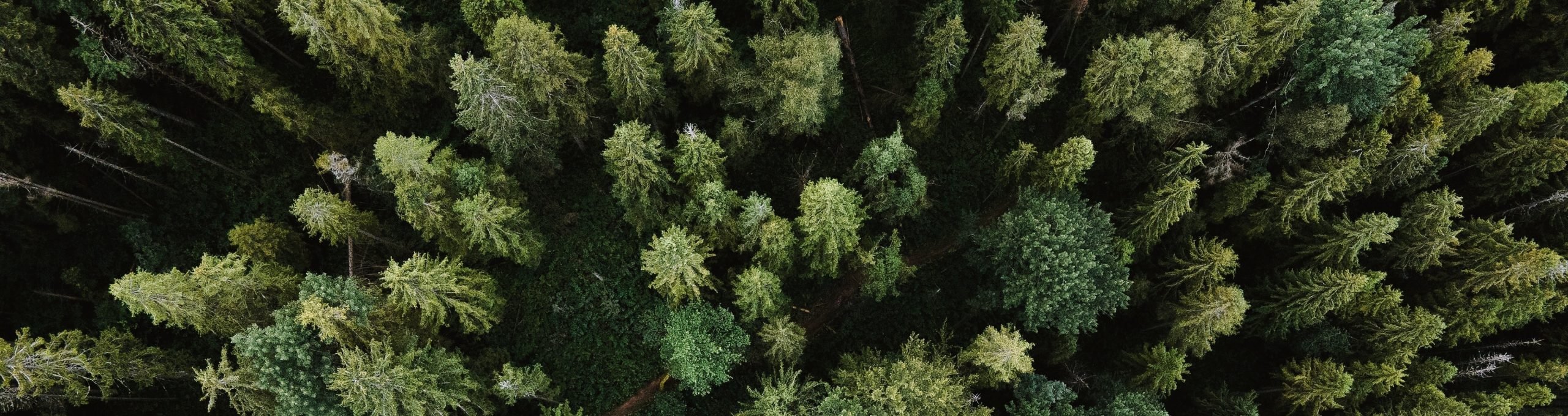 You Asked: Carbon Offsetting